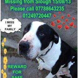Lost dog on 08 Dec 2014 in UK. LOST / STOLEN , Could be in ireland now