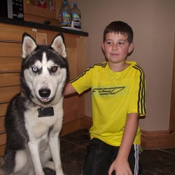 Lost dog on 08 Feb 2014 in Co kerry. Male husky 1year old missing from kilflynn co kerry  he is microchipped and wearing a collar with phone 0872071447  he has a blue eye and a brown eye ,very friendly