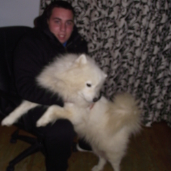Lost dog on 08 Jan 2013 in Malahide. lost two samoyed dogs this evening in malahide area if anyone see them please contact 0877523202