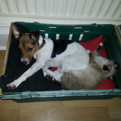 Lost dog on 08 Jan 2014 in Swords,Dublin. Please help me find my dog who got lost on 8.1.2014 in Forest Road in Swords.Her name is Casey,she is microchipped and she looks like Jack Russel with a bit longer legs.If you have seen her,please call 0851126223.Thanks for any help.