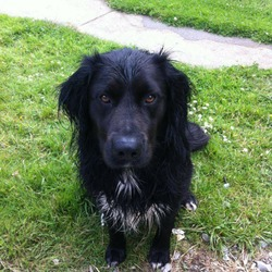 Lost dog on 08 Jan 2015 in mallow. Missing since 8th Jan collie lab x in mallow area, cork.