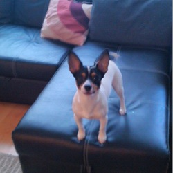 Lost dog on 08 Jun 2015 in Swords,CO.Dublin. Lost 1,5 years old Dog yesterday in Applewood Swords,his name is Cooper,if you have eny information,please call on  0862680526,0862357086