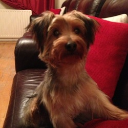 Lost dog on 08 Mar 2013 in beaumont, dublin 09. Hi Everyone,  we have lost our family pet and i was hoping you could repost this to help us find him. His name is TJ he is around 7 months old, beige and grey/black colouring,  and he went missing last night 08/03/2013 at 9pm from COOLRUA DRIVE, BEAUMONT, DUBLIN 09. Please contact LYNN @0857428247/0852480812 if anyone has any information. Thanks so much.