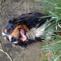 Lost dog on 08 Oct 2014 in Camblin,New Ross. LOST
