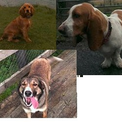 Lost dog on 09 Aug 2014 in leitreim. STOLEN from Drumshanbo Co.Leitrim leitrim, all from the same household. https://www.facebook.com/HaveYouSeenAmber/photos/a.796703263697165.1073741830.792242227476602/805933232774168/?type=1&theater