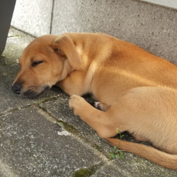 Lost dog on 09 Feb 2013 in ballybane road. we lost the dog in ballybane road,on sat at 11.20 ,it is mixed