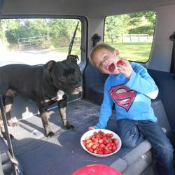 Lost dog on 09 Jan 2016 in AUGHNAFARCAN BROOMFIELD  CASTLEBLAYNEY. CHILDS  HEARTBROKEN (REWARD) LOST MALE BLACK STAFFORDSHIRE BULL TERRIER  IN AGHNAFARCAN  BROOMFIELD  CASTLEBLAYNEY ON 09/01/16  PLEASE SHARE IF YOU HAVESEEN HIM RING ME 0862022732  REWARD