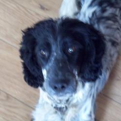 Lost dog on 09 Mar 2010 in Lusk,Dublin. black&white,