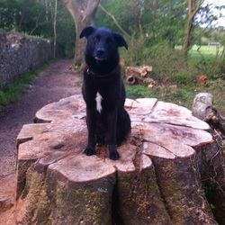 Lost dog on 09 Nov 2014 in Lotamore, Cork. Mixed breed, his name is Kane. His coat is completely Black with a White patch on his chest.