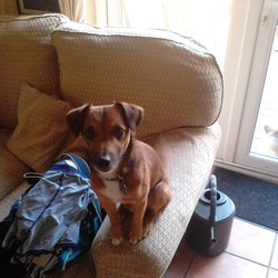 Lost dog on 10 Aug 2013 in Dublin 5. Lost my dog Marley late Friday night he somehow got out.. Its in the Killester/Donncarney area in D5.. Hes small short red coat and hes friendly.. If any1 has seen him please contact me i hope hes ok