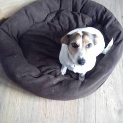 Lost dog on 10 Aug 2013 in Tallaght. Female Jack RussellX about 7 years old and wearing a brown collar. Shes microchipped and a bit nervous. Missing from Tallaght and might be with my other dog a female collieX  0851696008