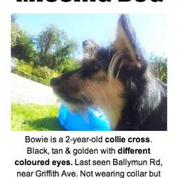 Lost dog on 11 Jun 2014 in GLASNEVIN. LOST DOG - MISSING SINCE LUNCHTIME TODAY FROM THE GLASNEVIN/BALLYMUN AREA. HER NAME IS BOWIE - COLLIE CROSS WITH 2 DIFFERENT EYES AND LONG TUFTS OF HAIR COMING FROM HER EARS.