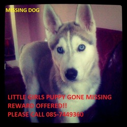 Lost dog on 11 Mar 2012 in Sutton, Dublin 13.. Hi there,