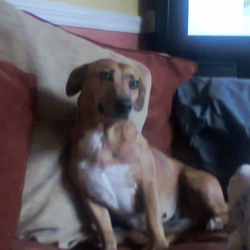Lost dog on 11 Nov 2014 in Cork city . Lost terrier in Cork City area, around at finbarrs cathedral dean street off gillabbey street, brown brown terrier her name is sandy very friendly it's our family dog contact number is 0851765082 thanks