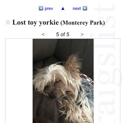 Lost dog on 12 Dec 0015 in Monterey park, CA. Male yorkie will respond to Gibby or Gibby bear last seen 12/12/15 at around 9pm in Monterey park, CA. He is very friendly. He has a history of having seizures. He will get very depressed being separated from his family. Please contact Tina Roberts if you have seen or have him. 6267574746