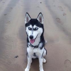 Lost dog on 12 Dec 2014 in Dublin 18. Colour : Black and white