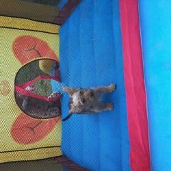 Lost dog on 12 Feb 2015 in dublin 13 baldoyle. we missing dog in the 35 seacliff avenue baldoyle,dublin 13 yorkshire phone 0857671431,0852483518