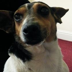 Lost dog on 12 Jun 2014 in Dollymount, off Clontarf Road. Female jack russell. about 3 years old, very friendly, has red collar on. Contact Bobby 0879670600
