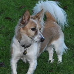 Lost dog on 12 May 2014 in MEATH. STOLEN....from Nobber-Kingscourt Road 12.05.14