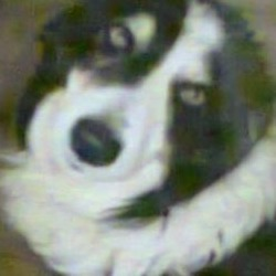 Lost dog on 12 Nov 2014 in kildare. lost since end oct Black and white sheepdog has gone missing, last seen in the Yellow Bog area, Kilcullen, county Kildare on the 22/10/14. The dog answers to the name Keeper. Please call Christy Miley on 0876386930, if you have seen or come into contact with such dog. Thank You.