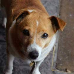 Lost dog on 12 Nov 2017 in Avondale, Rathdrum. Jack Russel Terrier(female), very friendly dog and often rolls over. Went missing on a Sunday Hike in Avondale near Rathdrum.
