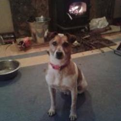 Lost dog on 12 Oct 2015 in aughrim co. Galway. STOLEN Stolen aughrim co. Galway. Family pet.CONTACT  0868098861