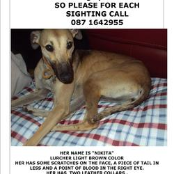 Lost dog on 12 Sep 2013 in Lucan - Dublin. HER NAME IS