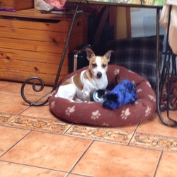 Lost dog on 13 Aug 2015 in Artane. Jack Russell lost yesterday at 3.00pm 13 Aug 2015 in Artane Dublin 5. If any information please call 0863472562