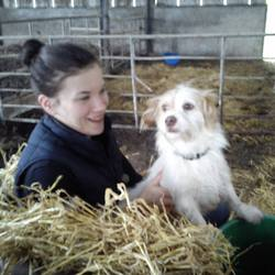 Lost dog on 13 Feb 2014 in Tipperary. Roly is a Terrier cross very friendly