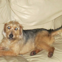 Lost dog on 13 Jan 2013 in ballyvolane, cork. found dog in ballyvolane area,cork.