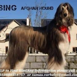 Lost dog on 13 May 2015 in IRELAND. STOLEN...STILL NOT RETURNED.....