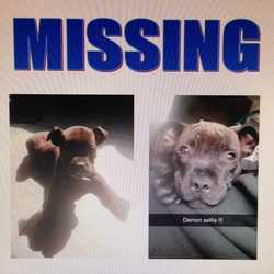 Lost dog on 14 Oct 2014 in Bailieborough Co Cavan. Missing since Tuesday 14/10/14 from Relaghbeg/Tierworker area of Bailieborough, Co Cavan. 