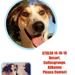 Lost dog on 14 Oct 2016 in Desart, Cuffesgrange, Kilkenny . Male-Neutered-Microchipped 