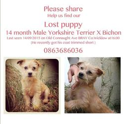 Lost dog on 14 Sep 2015 in Bray, Co. Wicklow. Lost in Bray