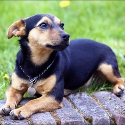 Lost dog on 15 Jan 2013 in Malahide, Co Dublin. Small JACK RUSSELL (male) Colour: Black & Tan Lost since JAN15th in MALAHIDE area. Contact darina on 0860244092 if you find him.