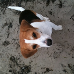 Lost dog on 16 Aug 2014 in Galway. Missing Spiddal - Moycullen Road, Galway