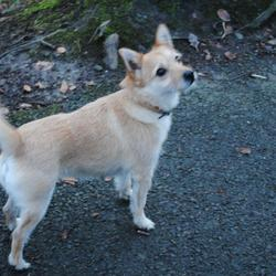 Lost dog on 16 Dec 2015 in Donnybrook/ Merrion road. Sandy/ Wheat coloured, terrier mix, female. Missing since afternoon of 16th Dec. Nutley Road/ Merrion area. Please call Conor 0872308156