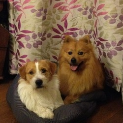 Lost dog on 16 Jun 2014 in ballygarvan. LOST .. dog on the left missing from ballygarvan 2 months