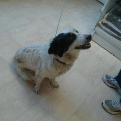 Lost dog on 16 Oct 2012 in Artane/Killester. Female Dog Black and white aged 2-4 years (approx) found in the Killester area. I think its a springer/collie or something Contact 0851238401