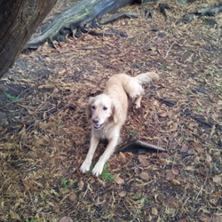 Lost dog on 17 Feb 2013 in Leitrim village. ** FOUND - THANK YOU **