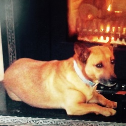 Lost dog on 17 May 2015 in Meath. At approx 1:30 he was taken from road gate , very friendly dog , ginger fur and brown eyes