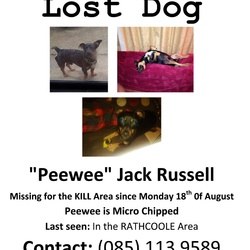 Lost dog on 18 Aug 2014 in Kildare . Lost jack Russell Black and Tan in colour with white patch on chest last seen in Kildare between kill and rathcoole answers to peewee reg and chip if found plz contact mark on 0851139589 thanks