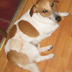 Lost dog on 18 Nov 2014 in Ballinrobe, Co.Mayo, Ireland. A male dog was lost on 18th of November, left outside the Supervalue shop in Ballinrobe, Mayo, for a couple of minutes (3-4min) after coming out from the shop owner found the dog missing. We were searching for him by ourselves for those few days but didn't find anything.