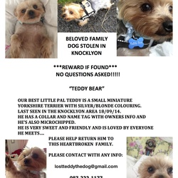 Lost dog on 18 Sep 2014 in Knocklyon,Dublin. Hi there guys! Our beautiful tiny Teddy Bear has been stolen from our family home in Knocklyon! We are beyond devastated! He is the heart of our little family! Can you guys please share this for us? And please spread the word and pray for a safe return home for our amazing little man! Would so appreciate it! Thanks you!