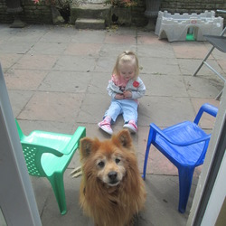 Lost dog on 19 Dec 2013 in Castletroy, Limerick. 15 and a half year old male mixed breed Pomeranian/Terrier - family pet got out of our house at approx 4pm on Thurs 19th December, 2013 in the Castletroy area, Limerick. His name is Caesar.  Possible sighting in the Monaleen Heights area. Reward offered for safe return.  Please contact 0851002318