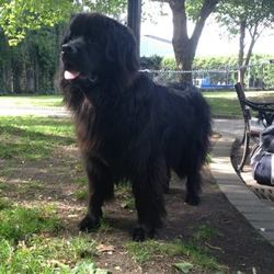 Lost dog on 19 Dec 2014 in Halfway, Ballinhassig, Co. Cork. Our beloved Baloo has gone missing from his home in Halfway, Ballinhassig today. He's not a wanderer so we're very worried about the circumstances of his disappearance.