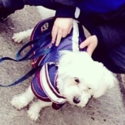 Lost dog on 19 Dec 2016 in Dundrum, Tipperary. Jasper is a white Maltese dog that went missing from his home as he was let out just for a few minutes in donaskeigh, Tipperary. He has no collar on him but is chipped.  He has been missing since Monday 19th December 2016 at 9am. He was last seen on the dundrum road on Aleen Bridge. Please if anyone has seen or knows anyone who has seen him please contact John Cotter on 087-7111777. He is a much loved dog by all his family and everyone is devastated that he is gone. So please keep an eye out.