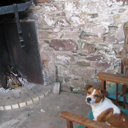 Lost dog on 19 Feb 2013 in Glen of the Downs Wicklow. 2 dogs missing Weimeraner & Jack Russell (brown/white)