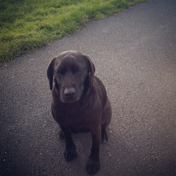 Lost dog on 19 May 2015 in Roscam Area. Small to Medium Black dog named Nipper. 5 year old Female. If found or seen please contact Grainne 0876350479 or 091752099