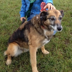 Lost dog on 20 Jan 2013 in Clare/Limerick. Very placid terrier cross, Female, responds to name